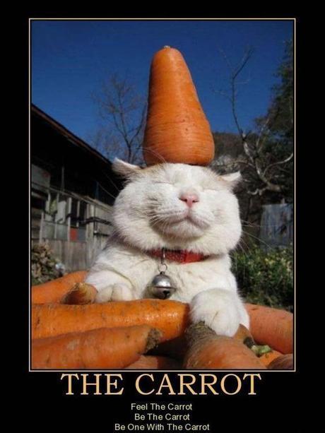 http://4.bp.blogspot.com/-fHWR6idNpck/Tx95AwtYeCI/AAAAAAAAe3w/cLyRe7X0uVw/s1600/the-carrot-carrots-n-cats-demotivational-poster-1269799659.jpg