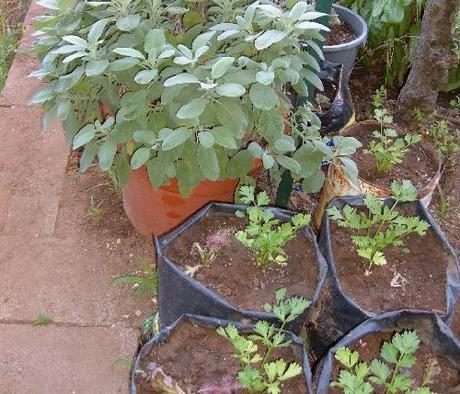 Calendario lunare di settembre tutte le semine dell 39 orto - Semina pomodori luna ...