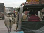 Rajasthan: viaggio Pushkar
