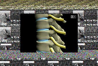 Quante vertebre in reparto cervicale di una spina dorsale a rettili