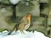 felicità, passero lascia sulla neve pochi se...