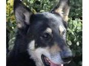 Capitan: cane anni veglia tomba padrone