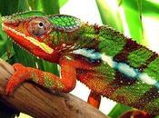 Sono geniali camaleonti…