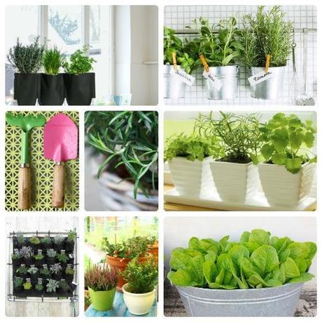 Piante aromatiche come coltivarle in casa paperblog - Porta piante aromatiche ...