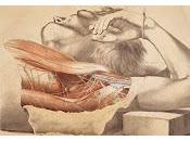 Halloween Londra: medici, dissezioni riesumatori cadaveri Museum London