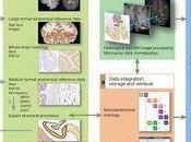 mappa genetica nostro cervello