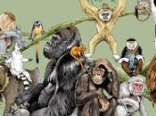 Album Famiglia Primo Primate