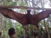 Catturato pipistrello gigante Perù