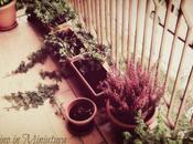 Giardino Miniatura