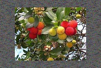 Alberi da giardino paperblog - Alberi da piantare in giardino ...