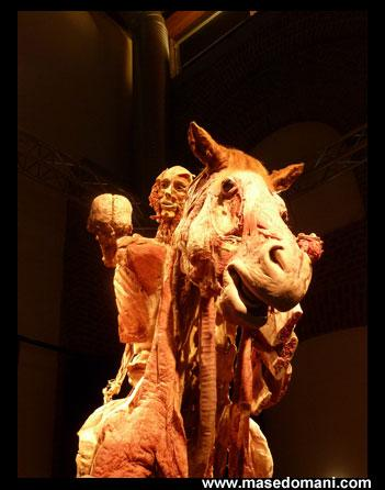 Mostre a milano body worlds paperblog - Mostre in lombardia ...