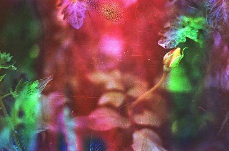 DISHWASHED FILM parte 1 - Rainbow Roses