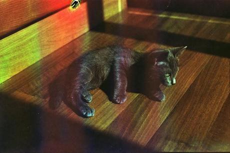DISHWASHED FILM parte 2 - Rainbow Cat