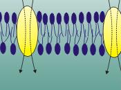 membrana cellulare ruolo delle proteine