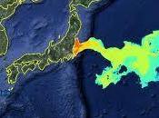 pesce Fukushima contiene volte limite legale Cesio radioattivo