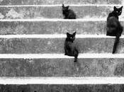 Voglio avere sette vite come gatti!