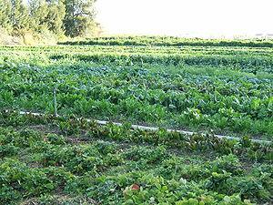 Istat : 6 aziende biologiche su 10 sono del Sud