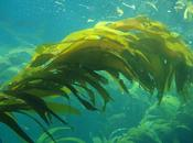 Repechage Alghe Trattamento Bellezza