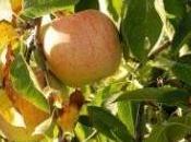 mela prodigioso frutto della natura