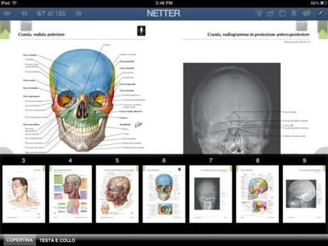Atlante di anatomia netter pdf download free apps for windows 10