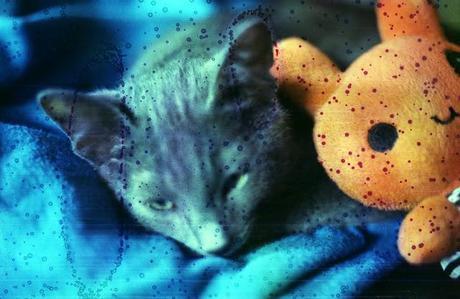 DISHWASHED FILM - Underwater Cat