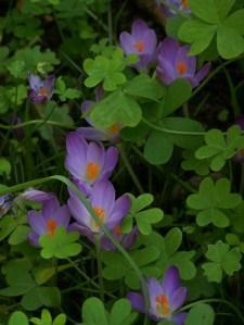 Raccoglier funghi e piantar bulbi paperblog - Bulbi estivi quando piantarli ...