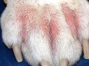 micoterapia nelle allergie cane gatto