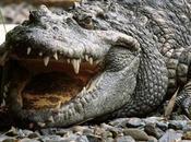 Pelle coccodrillo sensibile quella umana