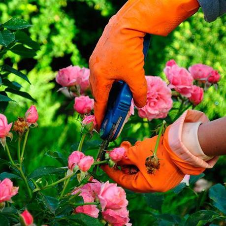 Corso di potatura nel castello delle rose paperblog for Potatura delle rose