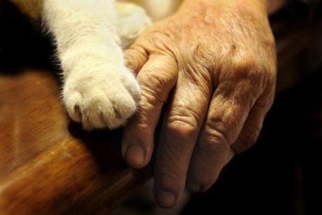 cute, sweet, cool, cat, funny cats, best friends, pets, Heartwarming: Old Lady Misa and Her Cat Best Friend Fukumaru
