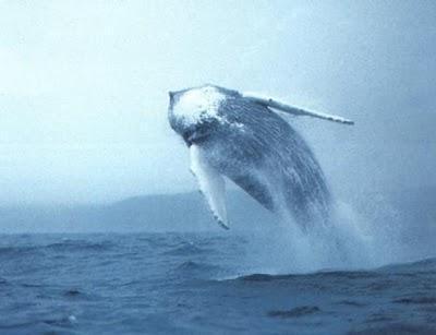 balene scottature solari