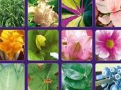 piante giuste ambiente accogliente