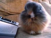 tricky bunny charlie