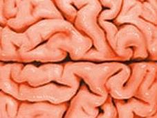 meraviglie nostro cervello spiritualità