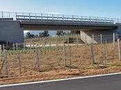 Vuole lanciarsi ponte Carabiniere salva