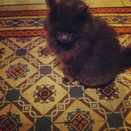 gatto geometrie