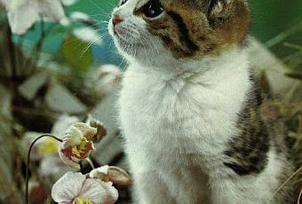 Elenco di alcune piante velenose e tossiche per i gatti for Piante velenose per i gatti