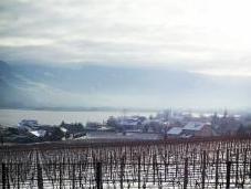 Alla scoperta vini dell'Alto Adige