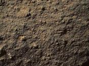 """""""Fiore Marte"""" scatti Curiosity Yellowknife"""