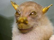 chiamato Belzebù povero pipistrello?