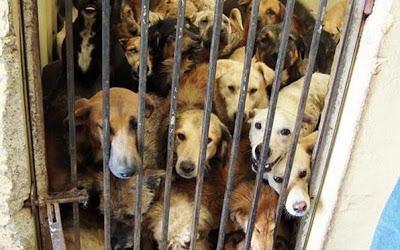 Orrore in Canada: camere a gas per animali. Ma nel resto del mondo lo ...