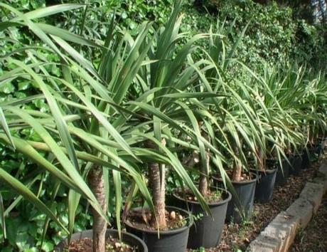 Suggerimenti le piante pi economiche che migliorano la - Edera da interno ...