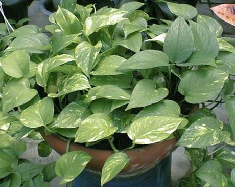 Suggerimenti le piante pi economiche che migliorano la - Si possono tenere le piante in camera da letto ...