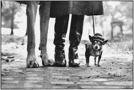 The others - Let me introduce you Elliott Erwitt