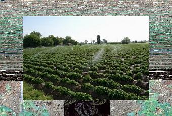 Impianto irrigazione fuori terra paperblog for Irrigatori fuori terra
