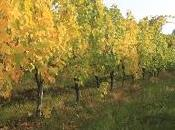 Nobile Montepulciano wine from Tuscany