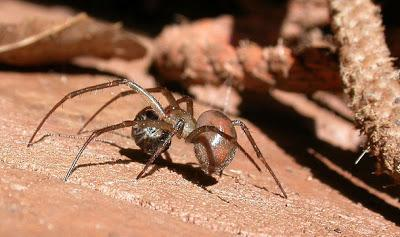 Scoperti ragni in cripte vecchie di 150 anni