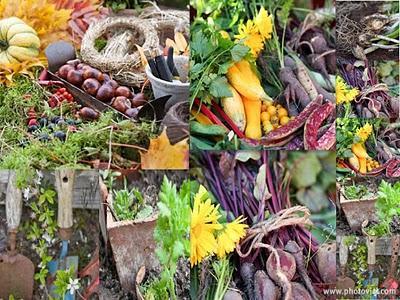 I lavori in giardino e nell 39 orto di novembre paperblog - Lavori in giardino ...