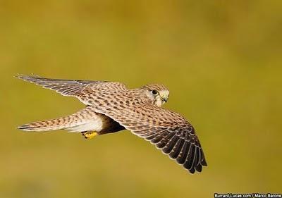 uccello fotografia