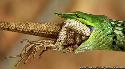 Wildlife through the lens, fotografie di natura selvaggia